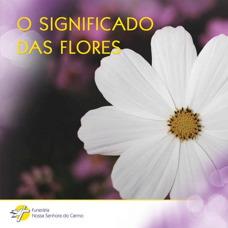 Saiba os significados das flores para homenagear seus entes queridos.